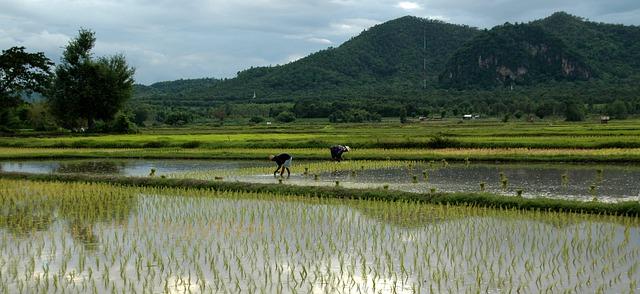 Natur og ris